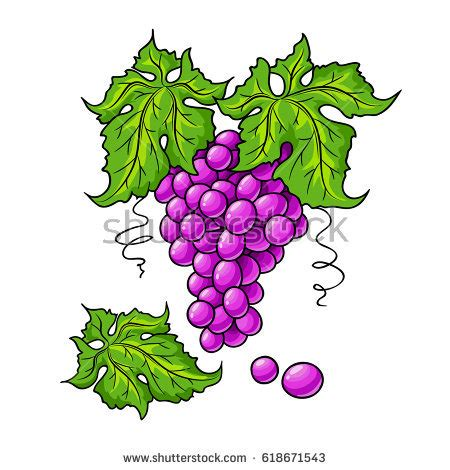 Essay on grapes in hindi
